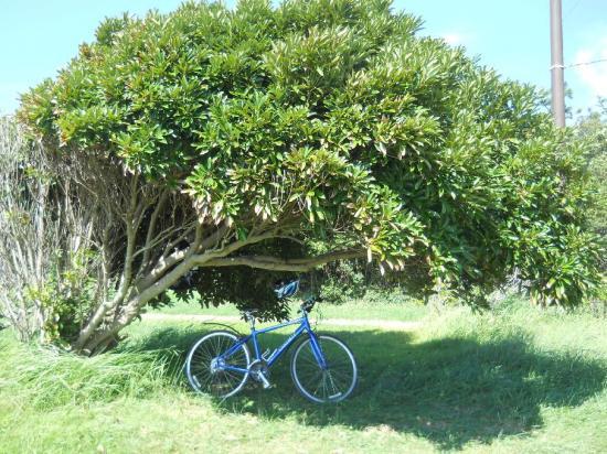 サイクリング9-18 (13)
