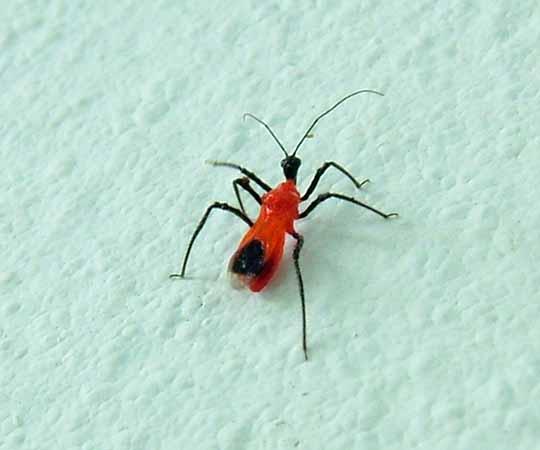 見た事のない赤い虫