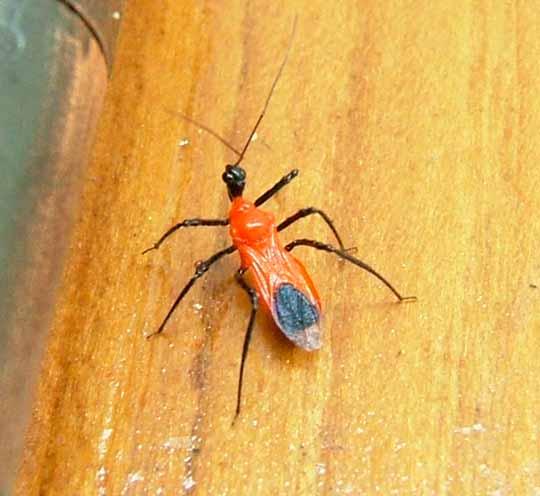 見た事のない赤い虫(2)