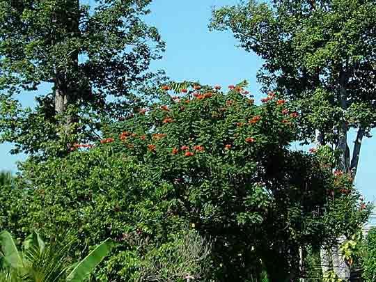 高い木に咲く花