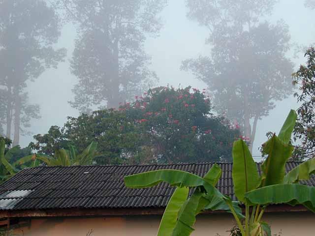 霧に霞むチェンマイ