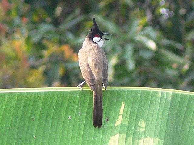鉄腕アトム鳥(2)
