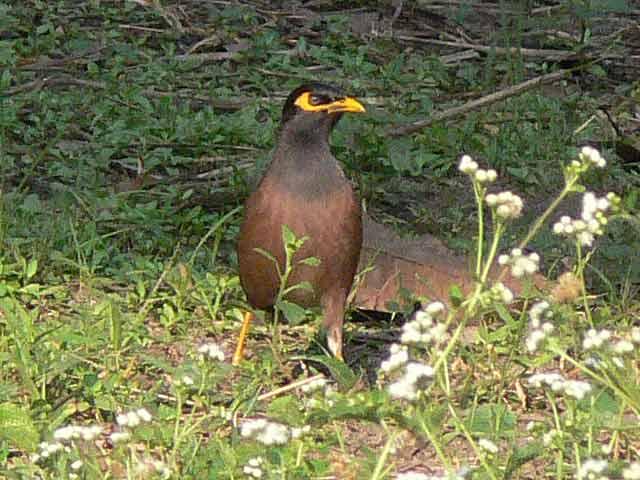 怖い顔の野鳥(2)