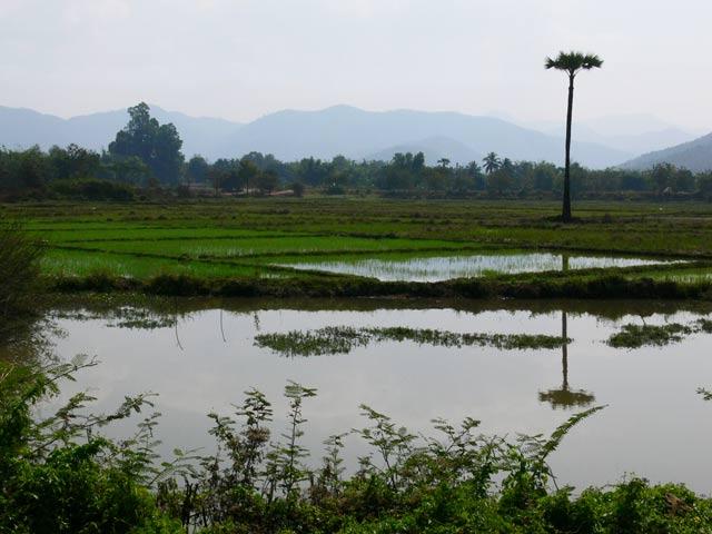 チェンマイ郊外の田園地帯