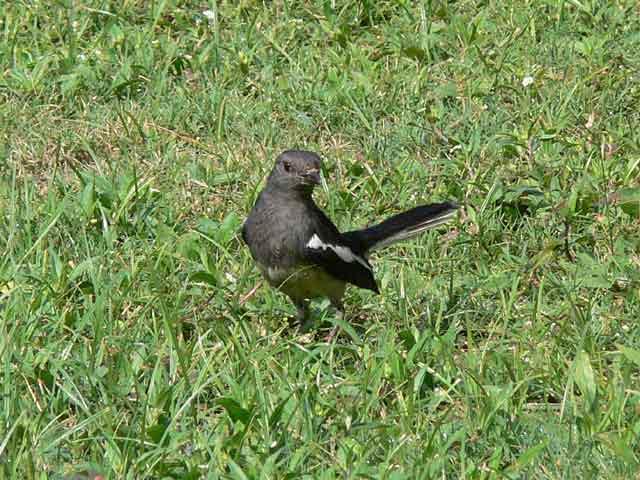 公園で見かけたかわいい野鳥