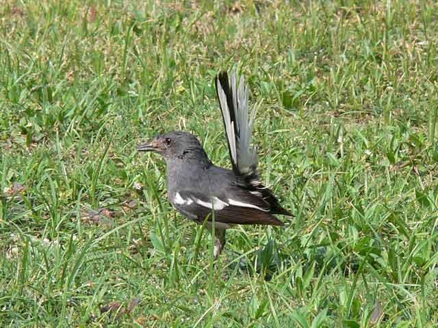 公園の野鳥(2)