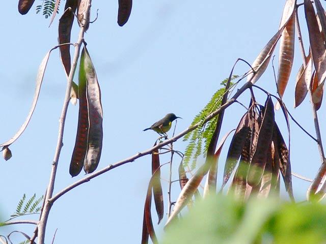 蜜を吸う鳥(2)