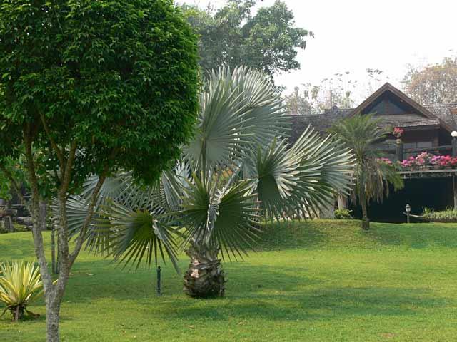 素敵なチェンマイ郊外の高原リゾート(2)