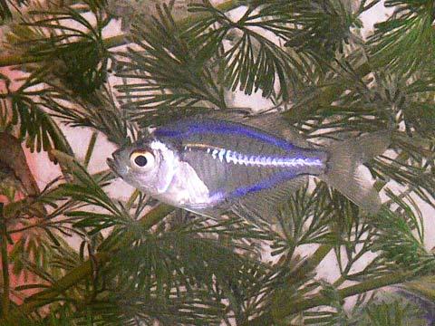 透明な魚(1)