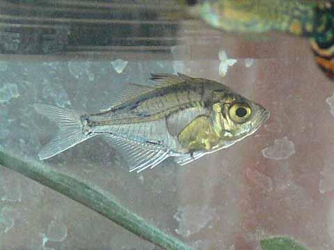 透明な魚(2)