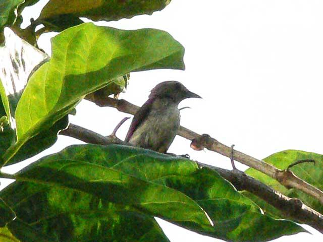 初めて目にする野鳥です(1)