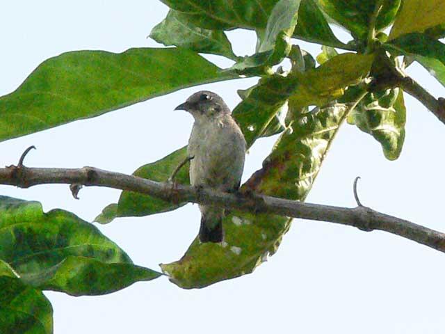 初めて目にする野鳥です(2)