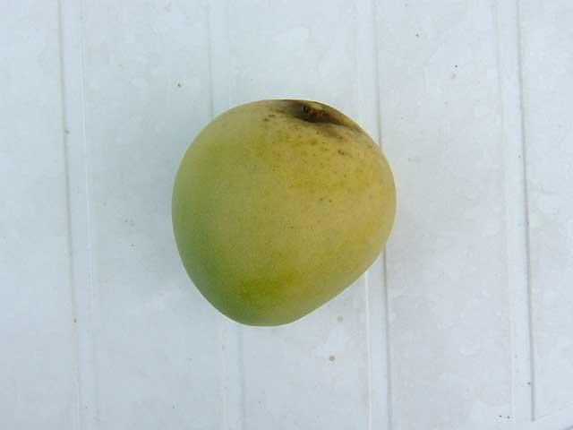 小ぶりなマンゴーですがちゃんと食べられました