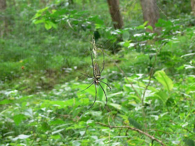 メーサーの滝で見かけた大きなクモ