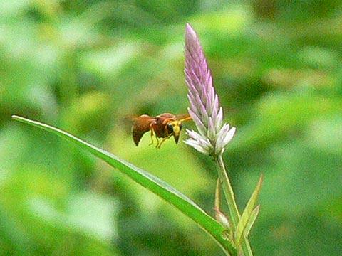 ハチの飛行