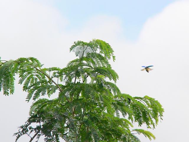 タマムシの飛行(2)