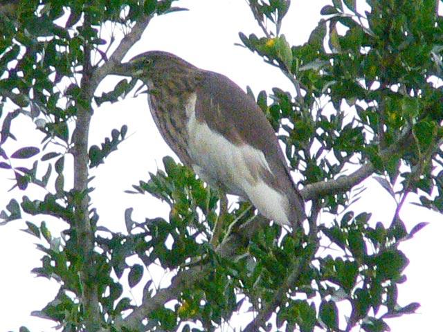 名前の分からない野鳥です(1)