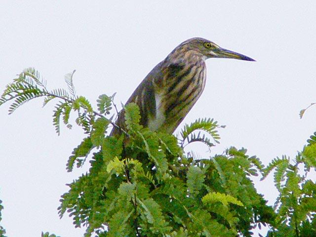 名前の分からない野鳥です(2)