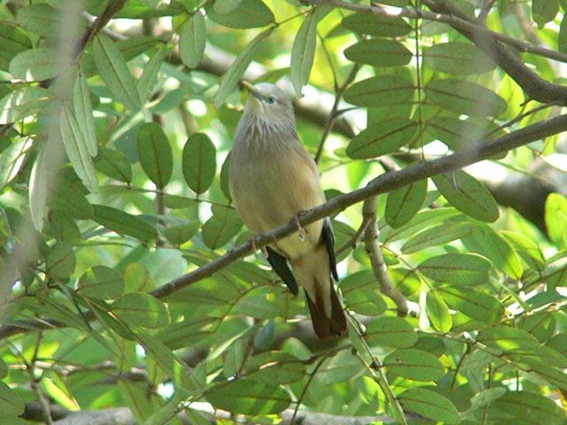 名前未詳の野鳥です
