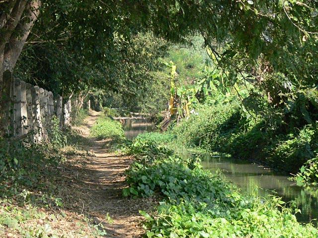 うっそうとした木立の散歩道