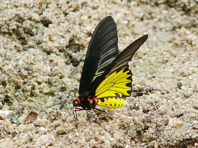 フアイケーオ滝で見かけた美しい蝶