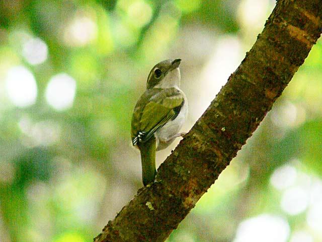 12~3センチの小型の野鳥です