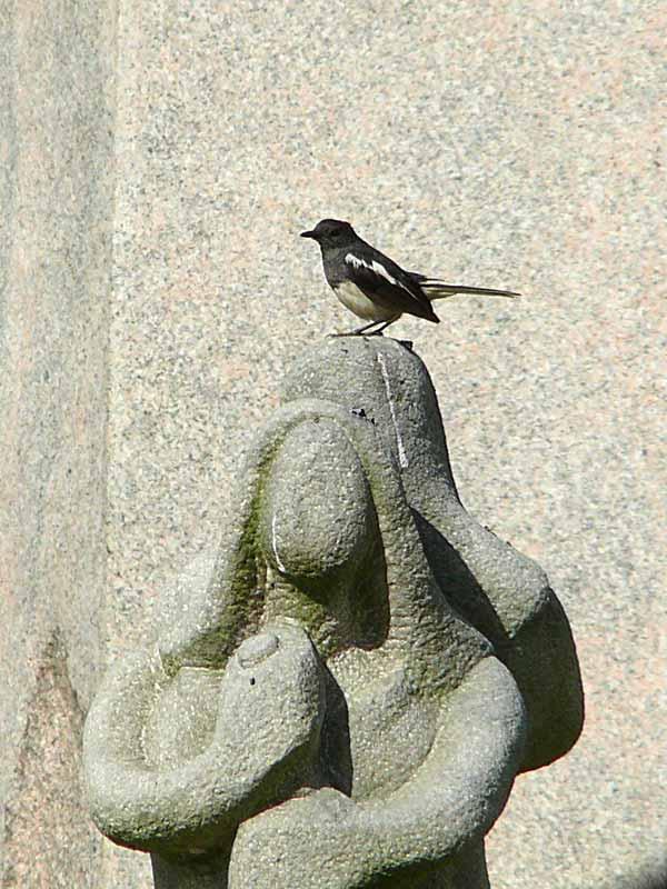 ラマ9世公園にて(3)