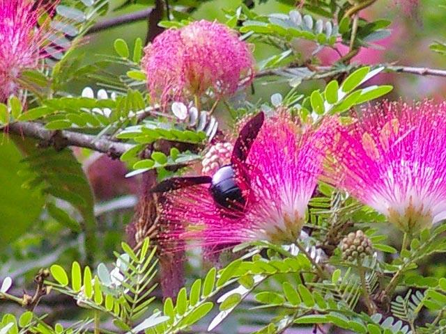 花に集まる昆虫(1)