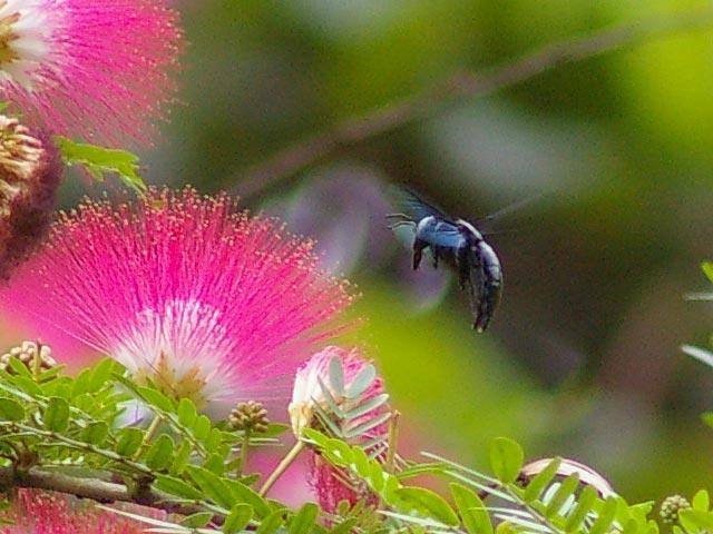 花に集まる昆虫(2)