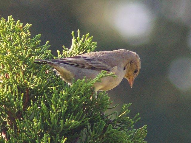 幼鳥(1)