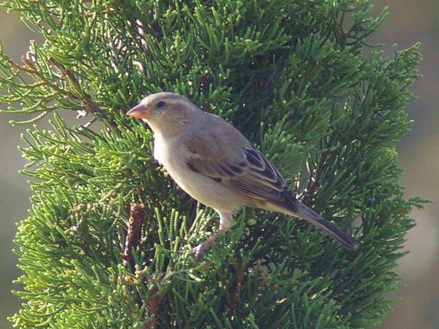 幼鳥(2)