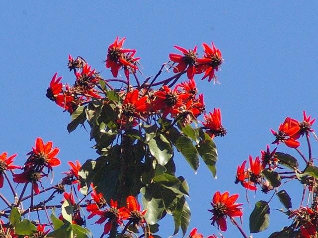 緑の木の葉の中に赤い花が(2)
