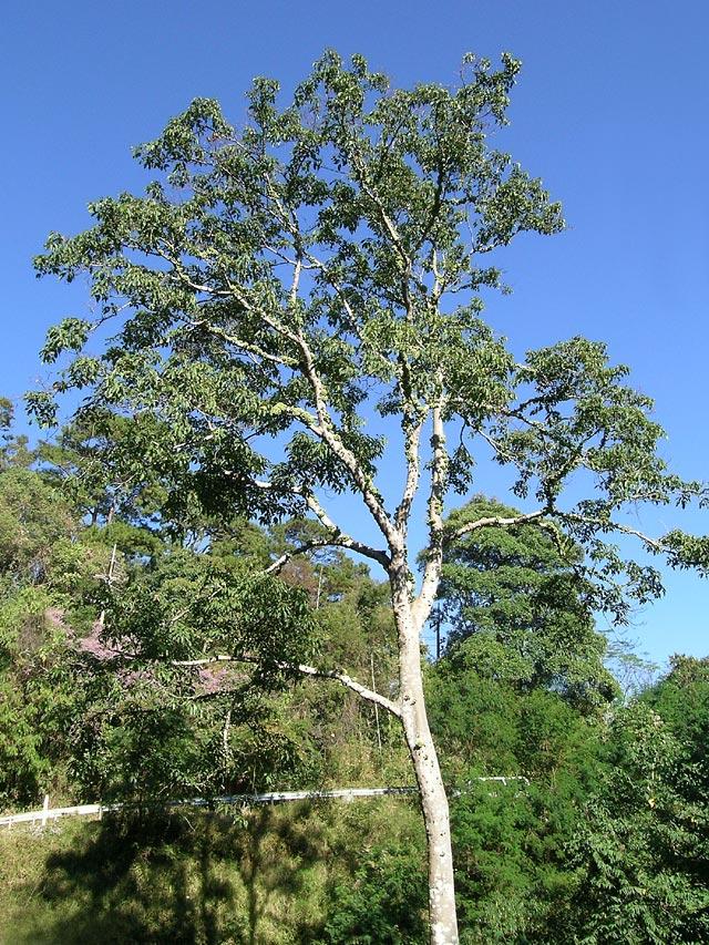 木の幹に張り付いているのは?
