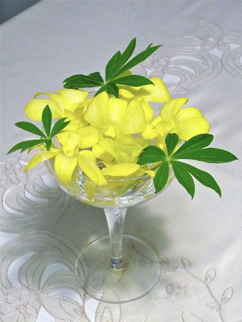 黄色デンファレ