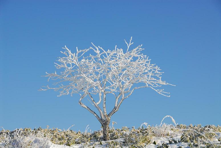 美幌峠の樹氷