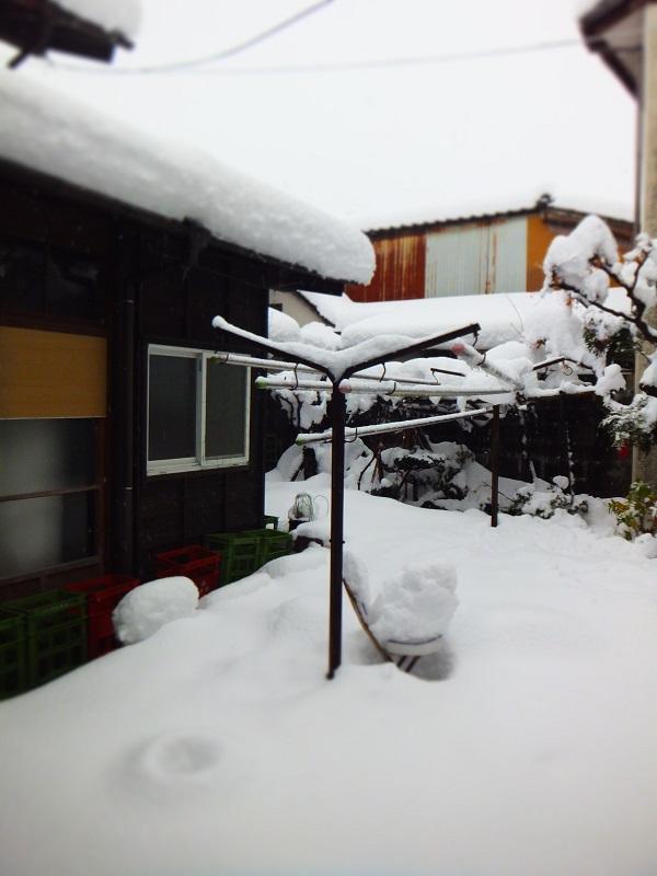 2014初雪 中庭
