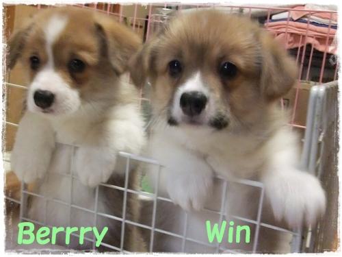 berry&Win