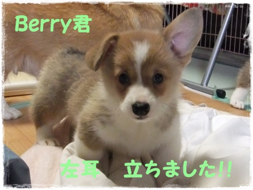 Berry君
