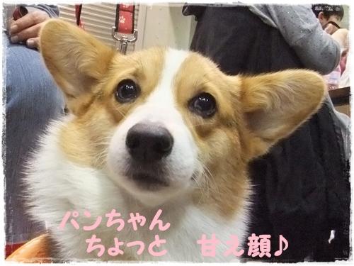 甘えん坊 ぱんちゃん