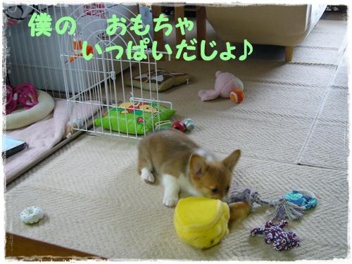 おもちゃで遊ぶでしゅ♪