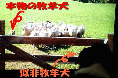 1118-2_20111201160232.jpg