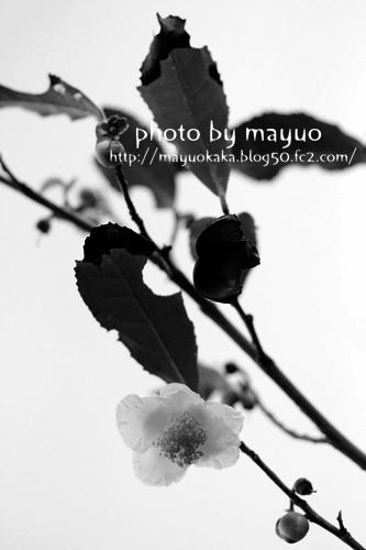photo*photo
