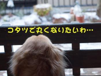 写真1056(№257)1