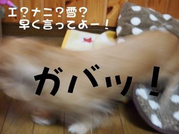 写真1078(№260)1