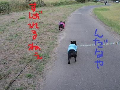 f7_20121102234827.jpg