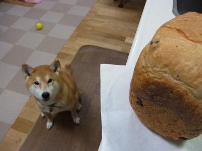 あ、パンだぁ!