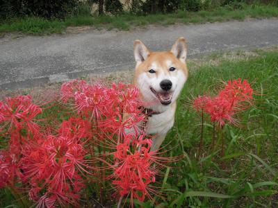 お花のかげから こんにちは!