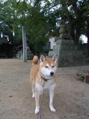 お散歩コースにある神社です