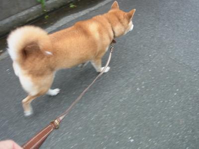 さぁ、今日も歩きますよ!