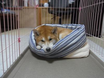このベッド 好き…